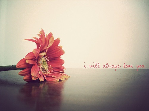 Free ily flower phone wallpaper by bonita116