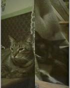 2 cats,buddies