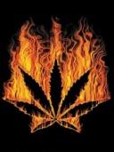 Free Weed phone wallpaper by rockafella