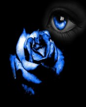 Free Blue Rose.jpg phone wallpaper by contractplumber