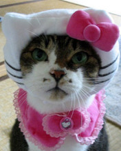 Free hello-kitty-cat-clothing-01.jpg phone wallpaper by totallyepic