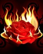 Flaming Rose.jpg
