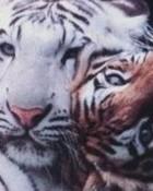 2_tigers.jpg