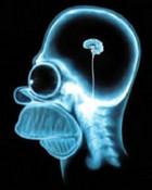 Homer X-Ray.jpg