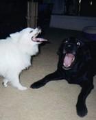 crazy dogs.jpg