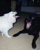 crazy dogs.jpg wallpaper 1