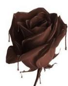 Chocolate Rose.jpg