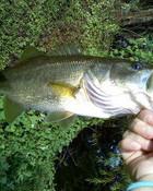 fishhyye