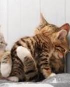 kitty wallpaper 1