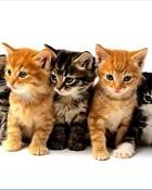 cute_cats