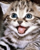 kitten_smile