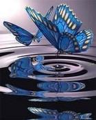Delicate Reflection.jpg