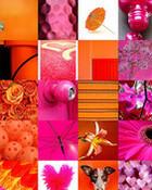 pink and orange photostream