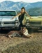 gto tiger.jpg