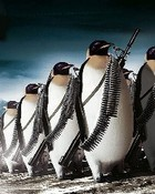 Penguin_Army_Wallpaper.jpg wallpaper 1