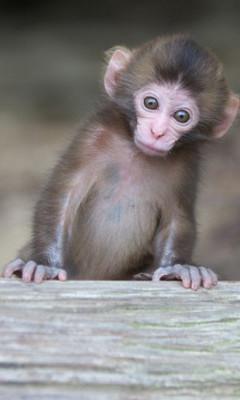 Free monkey monkey monkey i see you  phone wallpaper by maybabii89