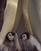 penguin2.jpg