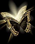 black_butterfly-28.jpg