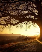 Sunset Trees wallpaper 1