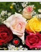 fathers-day-roses-dsc02889-ws.jpg.c.jpg wallpaper 1