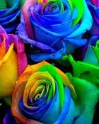 roses-215953.jpg