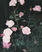 pinkish roses.