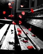 romantic-red-petals-.jpg