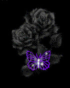 black rose with purple butterfly