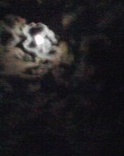 Midnight Shadows wallpaper 1