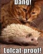 Kitty or Hedgehog