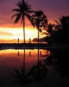 Palm Spring.jpg