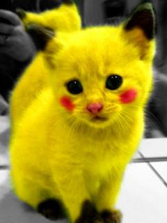 Free pikachu-cat.jpg phone wallpaper by genilovedyou