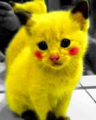 pikachu-cat.jpg wallpaper 1