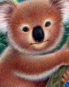Koala-bear-illustrated.jpg