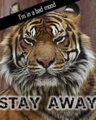 Angry_Tiger.jpg