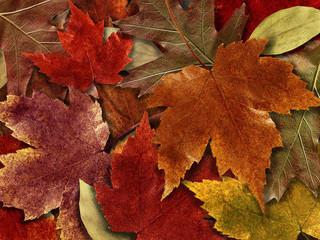 Free Autumn Leaves phone wallpaper by missjas