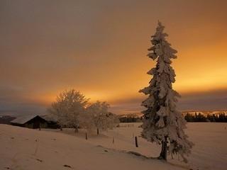 Free Winters Glow phone wallpaper by missjas