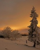 Winter's Glow wallpaper 1