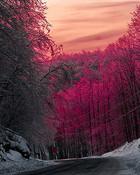 nature-pink-road-sky-snow-sunset-Favim_com-42951.jpg