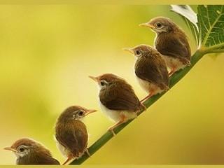Free Little Birds phone wallpaper by missjas