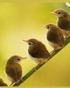 Little Birds wallpaper 1
