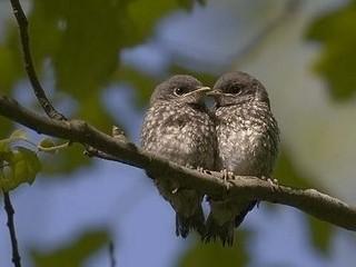 Free Cuddle Birds phone wallpaper by missjas