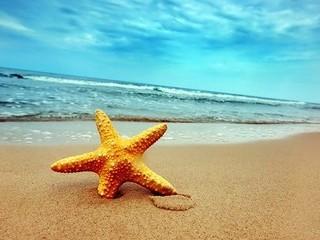 Free Beached Starfish phone wallpaper by missjas