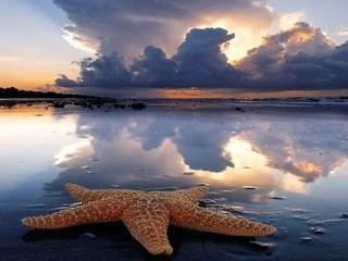 Free Starfish at Sunset phone wallpaper by missjas