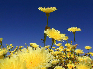 Free Yellow Wildflowers phone wallpaper by missjas