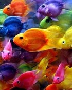 A Rainbow of Fish wallpaper 1