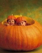 Pumpkins by Anne Geddes wallpaper 1