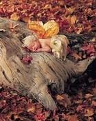 Anne Geddes Woodland Baby Fairy