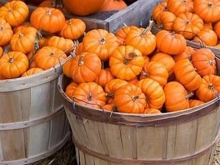 Free Pumpkin Harvest phone wallpaper by missjas