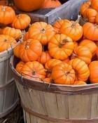 Pumpkin Harvest wallpaper 1